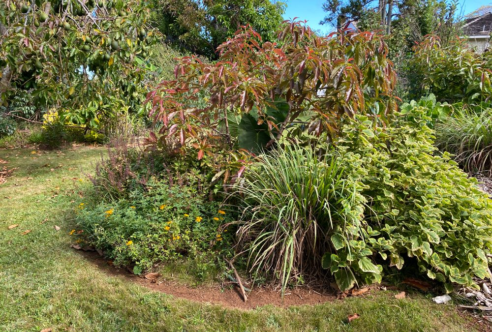 COMPANION PLANTING FOR FRUIT TREES