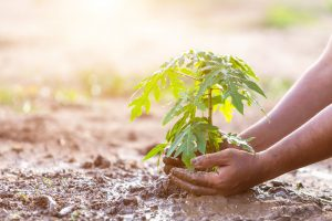 How to care for your fruit trees